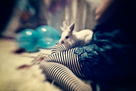 holga, portrait, beauty, lensbaby, creative photography, photography, bochum, alice in wonderland, bunny, cosplay
